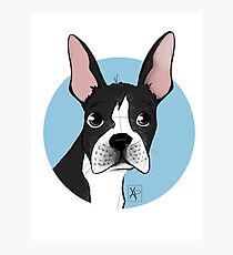 Boston Terrier Love  Photographic Print