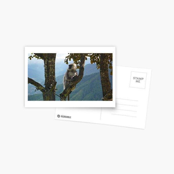 Langur in the wild Postcard