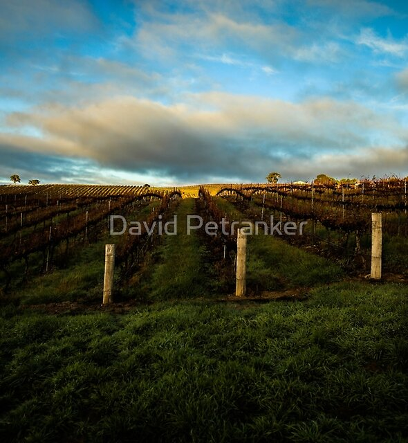 Winery by David Petranker