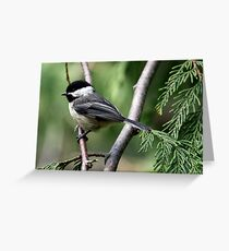 Black-Capped Chickadee Profile Greeting Card
