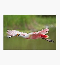 Pink Cruiser Photographic Print