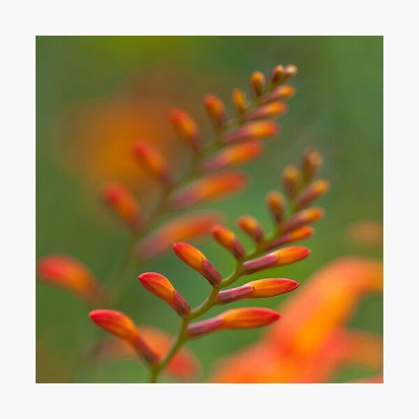Ignited Photographic Print