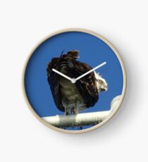 Osprey - Cottesloe - predator with attitude Clock