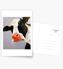 Daisy the curious cow Postcards