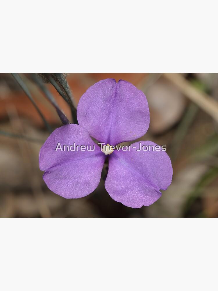 Silky Purple Flag (Iris) by andrewtj