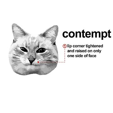 Blini cat 'Contempt' expression chart by FuzzyDesigns