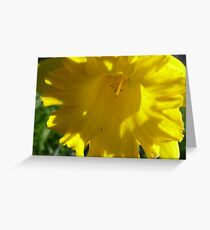 Daffodil Day against Cancer. Greeting Card