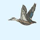 Duck In Flight by SerenSketches