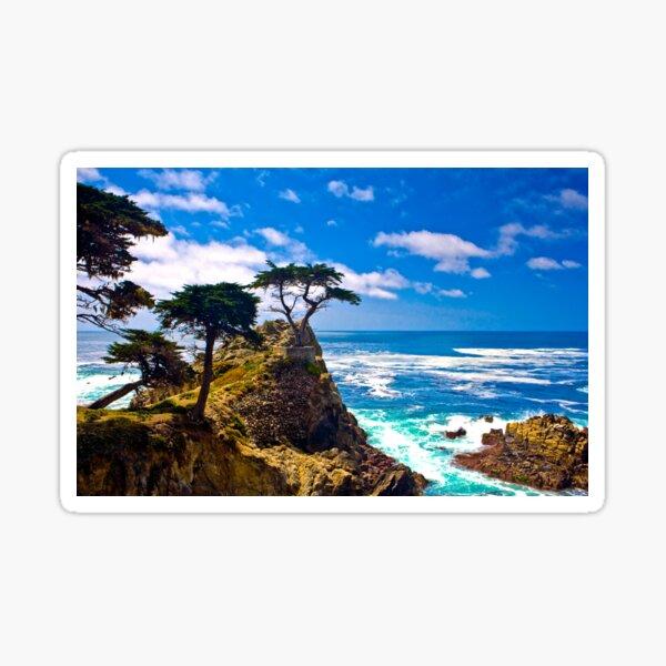 Monterey Lone Cypress Sticker