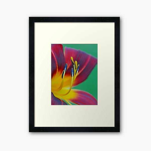 Day Lily Framed Art Print