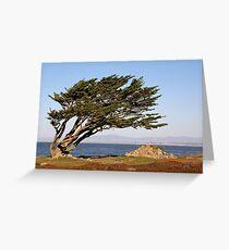 Coastal Cypress Greeting Card