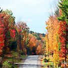 Fall Colors in the Poconos by Pam Moore