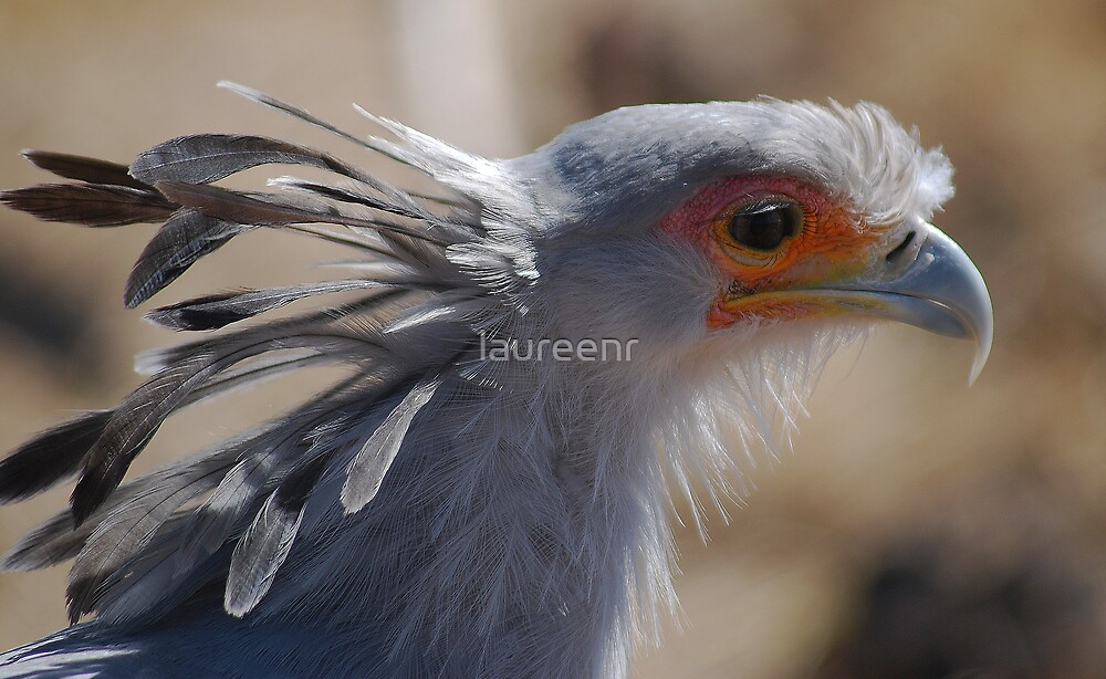 My Feathery Crown by laureenr