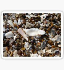 Seashells 4 Sticker