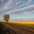 Country Road by Kevin Blake