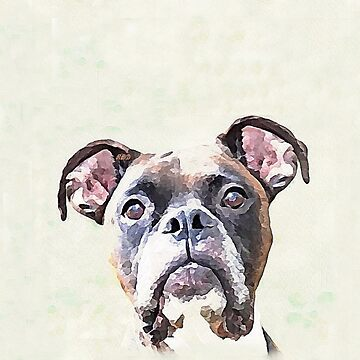 Brindle Boxer Dog by ritmoboxers