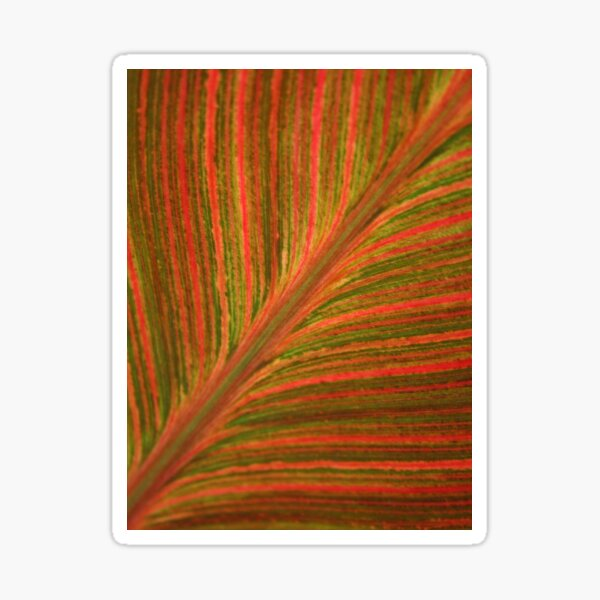 Natural Abstracts - Leaf Pattern Sticker