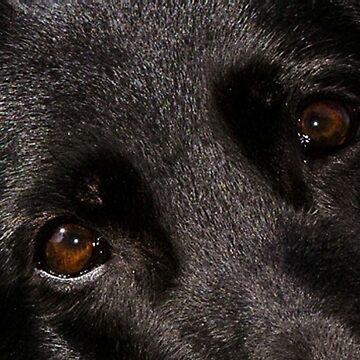 german shepherd eyes black by marasdaughter