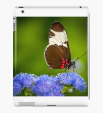Butterfly on green background and the grass iPad Case/Skin