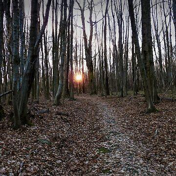 Turn Right At The Setting Winter Sun by MenegaSabidussi