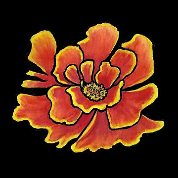 Marigold with black background by skinnyginny