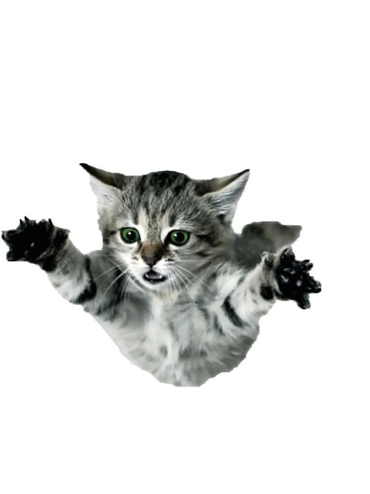 gato de hcpeck