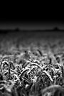 Wheat, Stand Tall by Andy Freer