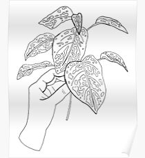 Holding Plant Cuttings Illustration Poster