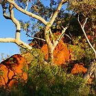 Pilbara Gums by Harry Oldmeadow