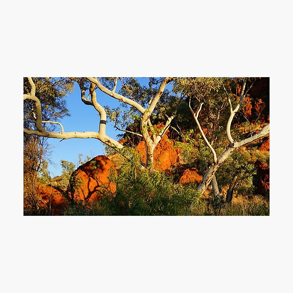 Pilbara Gums Photographic Print