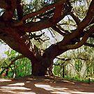 The Weeping Blue Atlas Cedar by Alex Cassels