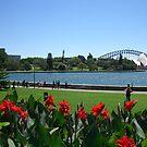 Sydney Panorama by inglesina