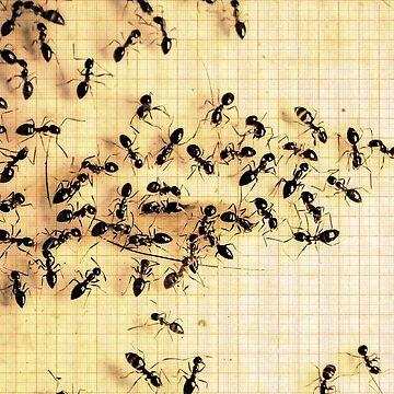 ©NS Ants Metering IA by OmarHernandez