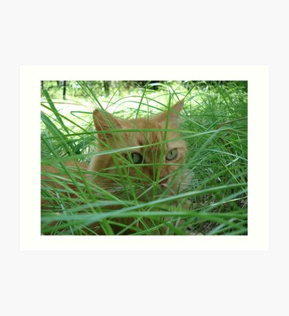 Tiger in the Tall Grass Art Print