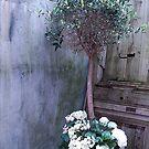 Olive Tree by inglesina