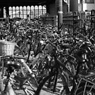 Bicycles by inglesina