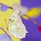 Tropical butterfly sitting on the colored bush over yellow and purple background by anytka