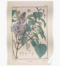 Plante et Ses Applications Ornementales Ornamental Plants Grasset Eugene Maurice Pillard Verneuil 1896 Art Nouveau 0093 Lilac Poster
