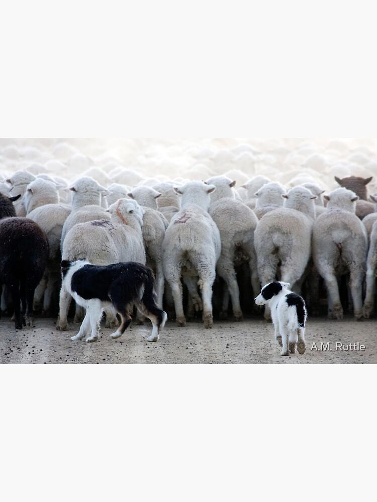 Sheep Dog in Training, Red Desert, Wyoming by annruttle
