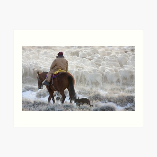 Sheep Herding, Red Desert, Wyoming Art Print