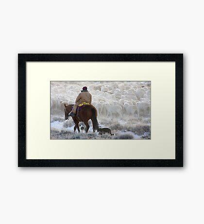 Sheep Herding, Red Desert, Wyoming Framed Print