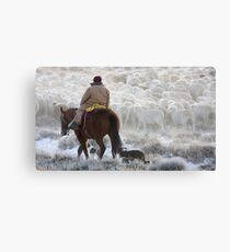 Sheep Herding, Red Desert, Wyoming Canvas Print