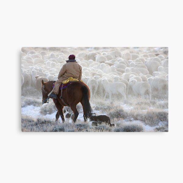 Sheep Herding, Red Desert, Wyoming Metal Print