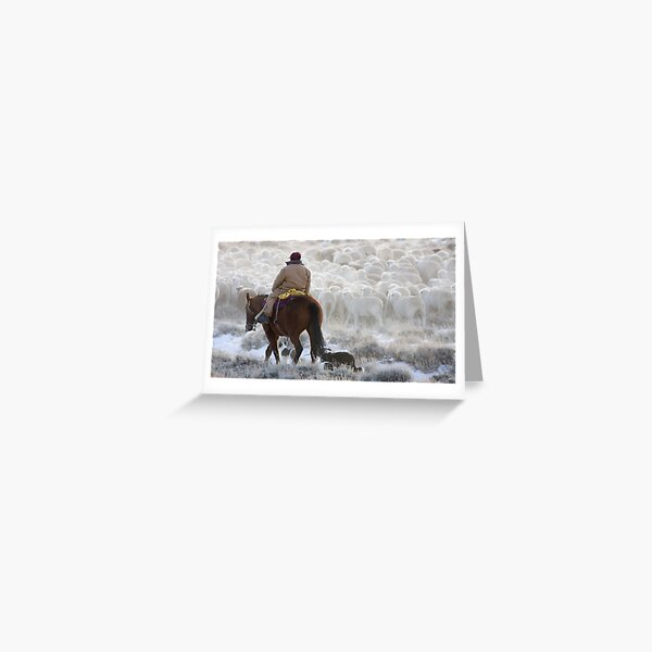 Sheep Herding, Red Desert, Wyoming Greeting Card