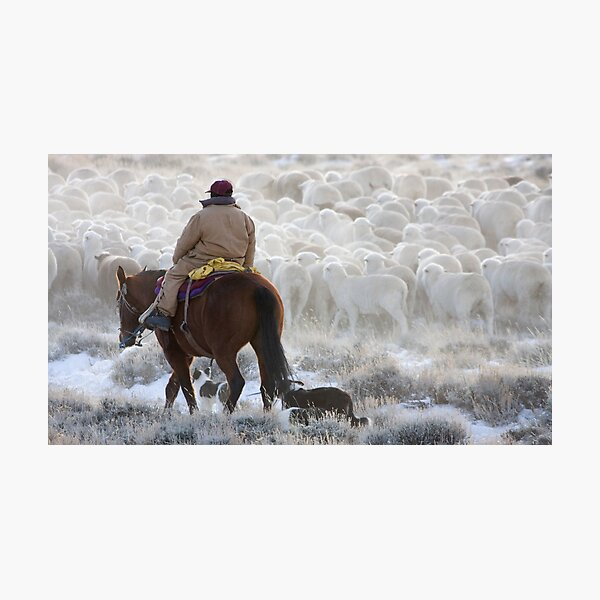Sheep Herding, Red Desert, Wyoming Photographic Print