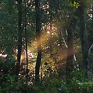 Forest sunbeam by PJS15204