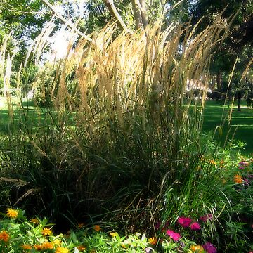 I Love Tall Grasses! by Lynnsong