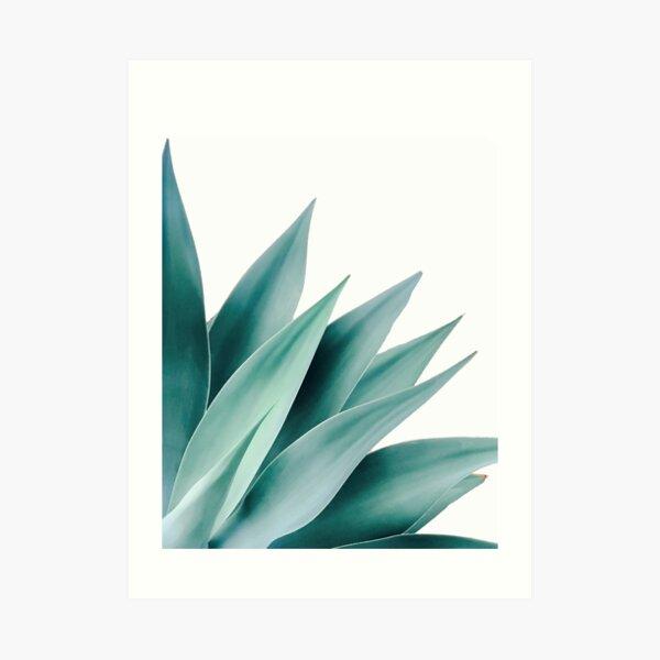 Agave flare II Art Print