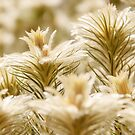 Tiny hairs in spot focus of glowing golden plants by Danielasphotos