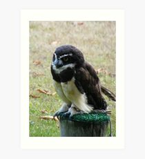 """Spectacled Owl"" Art Print"